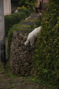 cat on the wall